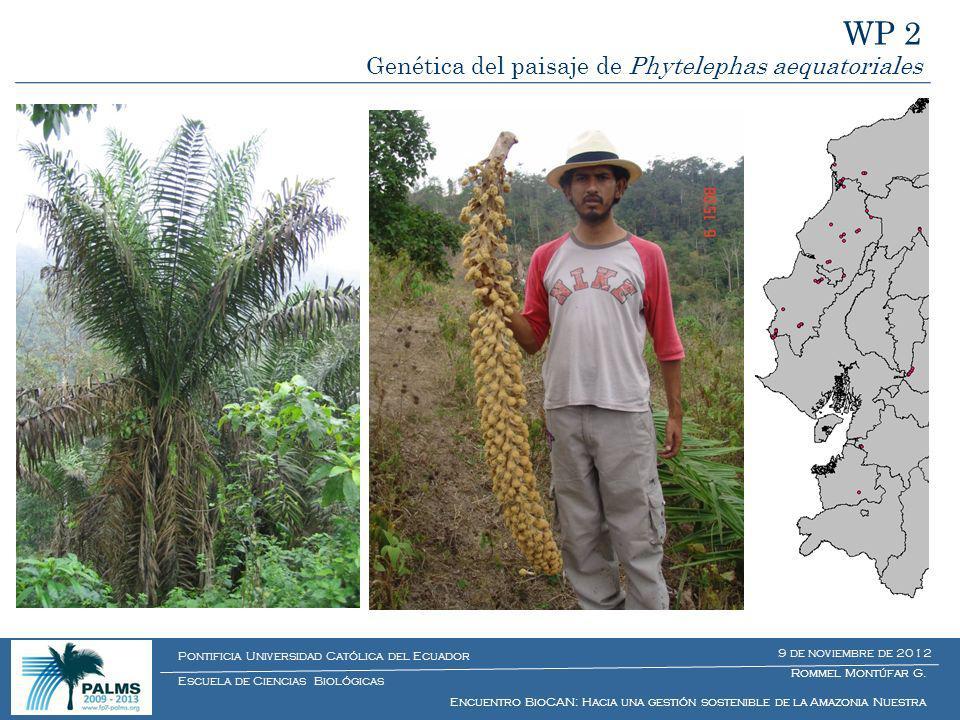 WP 2 Genética del paisaje de Phytelephas aequatoriales