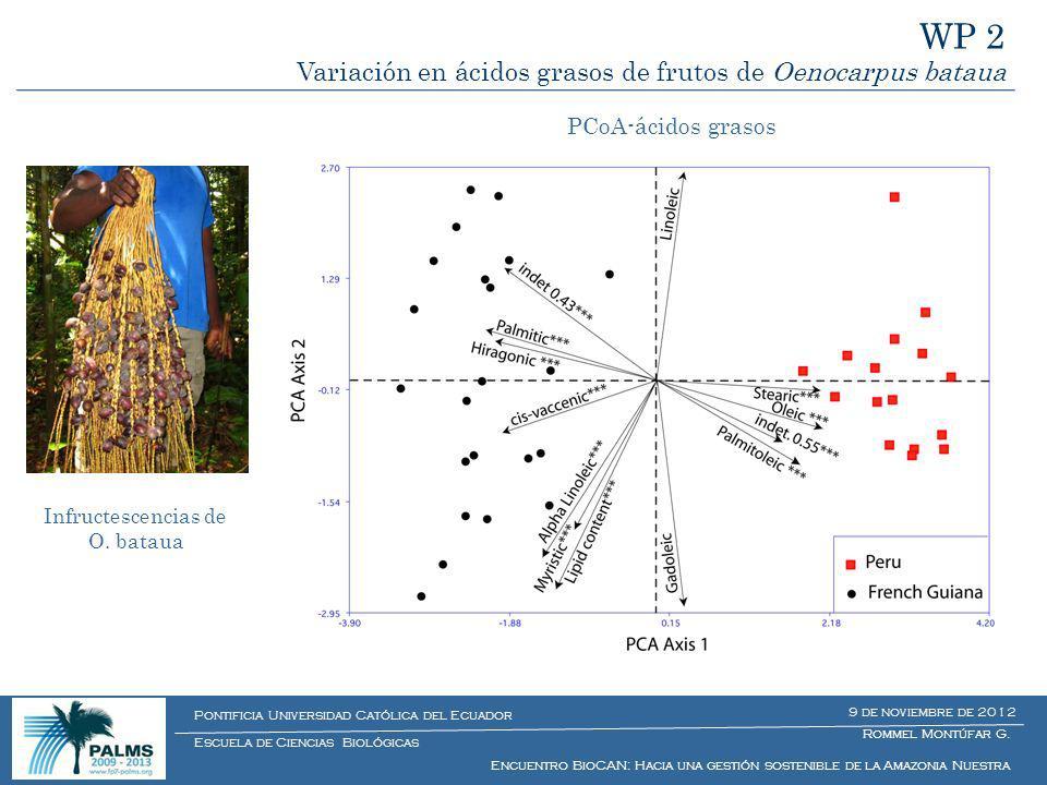Estructura bioquímica de frutos de O. bataua