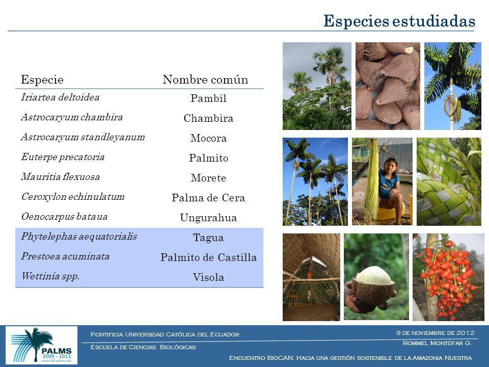 Especies estudiadas Especie Nombre común Pambil Chambira Mocora