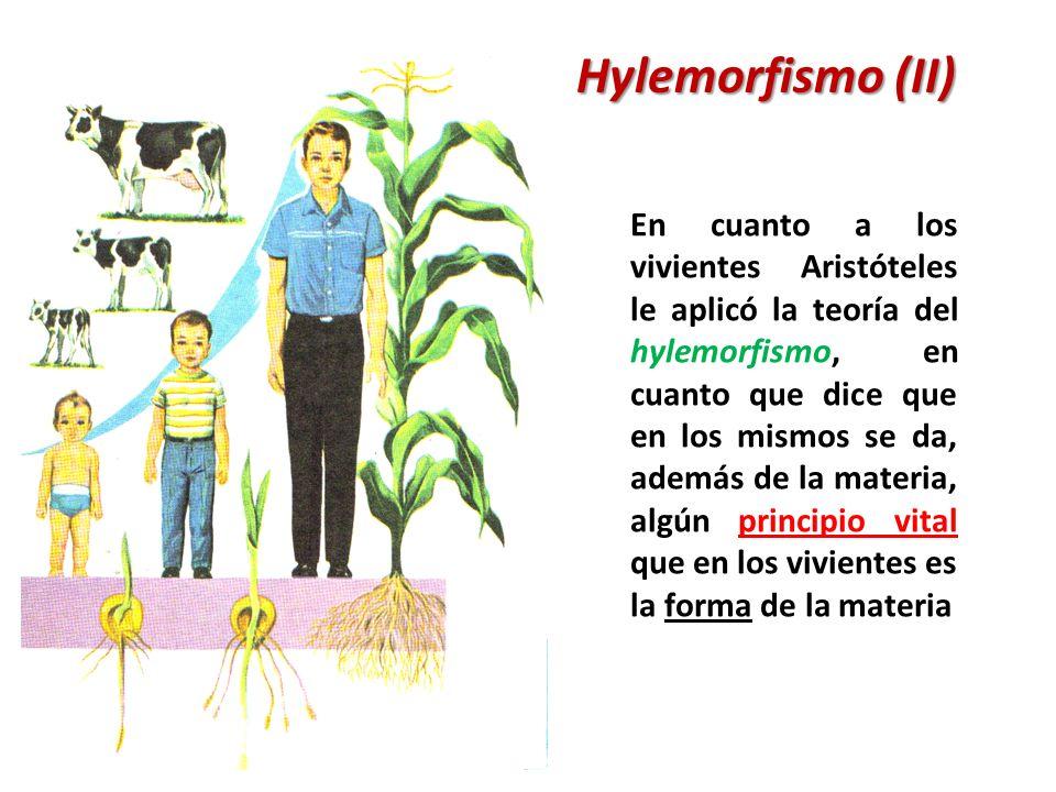 Hylemorfismo (II)