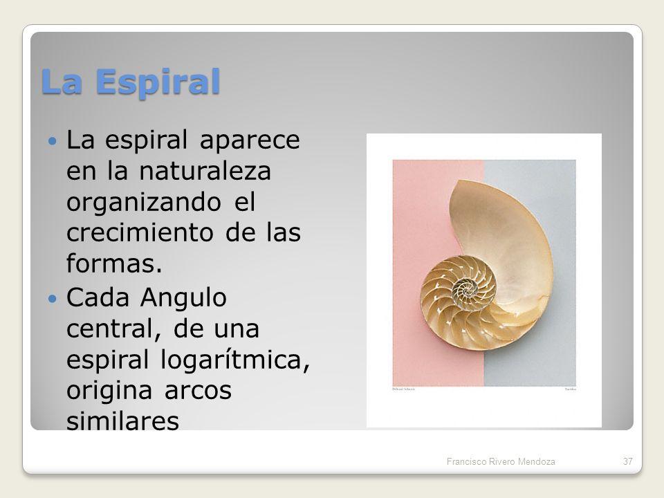 La Espiral La espiral aparece en la naturaleza organizando el crecimiento de las formas.