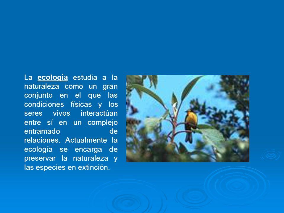 La ecología estudia a la naturaleza como un gran conjunto en el que las condiciones físicas y los seres vivos interactúan entre sí en un complejo entramado de relaciones. Actualmente la ecología se encarga de preservar la naturaleza y las especies en extinción.