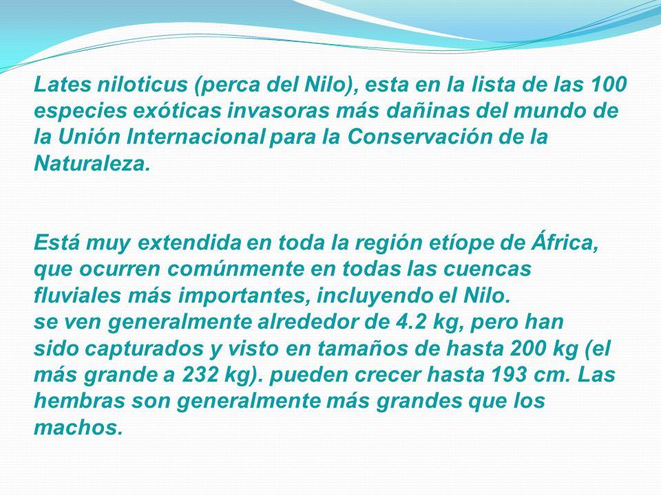 Lates niloticus (perca del Nilo), esta en la lista de las 100 especies exóticas invasoras más dañinas del mundo de la Unión Internacional para la Conservación de la Naturaleza.