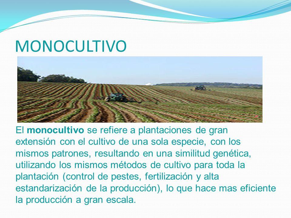 MONOCULTIVO El monocultivo se refiere a plantaciones de gran