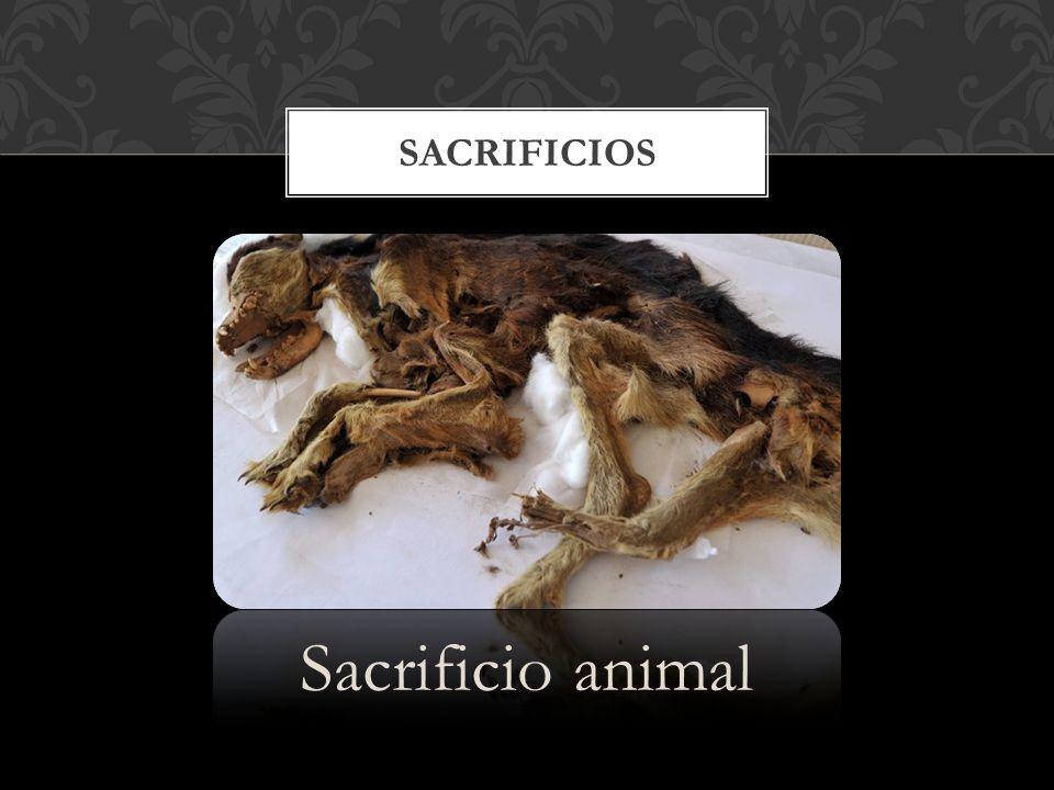 Sacrificios Sacrificio animal