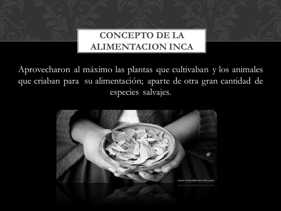 CONCEPTO DE LA ALIMENTACION INCA