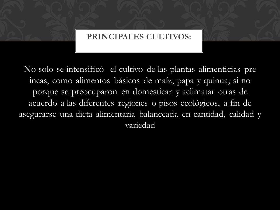 PRINCIPALES CULTIVOS: