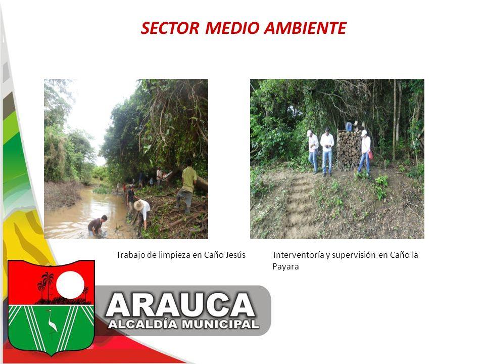 SECTOR MEDIO AMBIENTE Trabajo de limpieza en Caño Jesús Interventoría y supervisión en Caño la Payara.