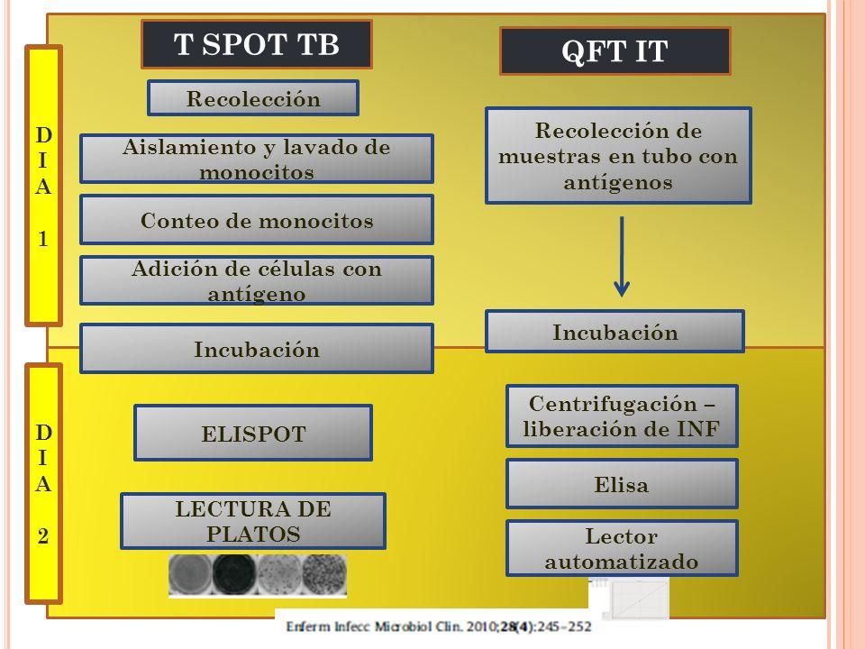 T SPOT TB QFT IT D Recolección I A