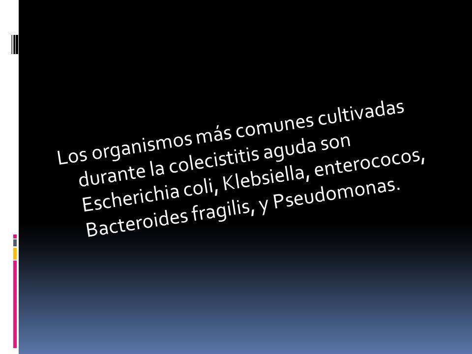 Los organismos más comunes cultivadas durante la colecistitis aguda son Escherichia coli, Klebsiella, enterococos, Bacteroides fragilis, y Pseudomonas.