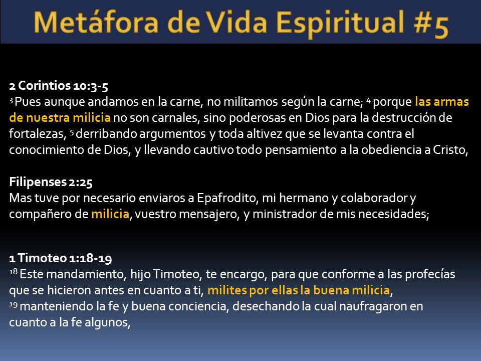 Metáfora de Vida Espiritual #5