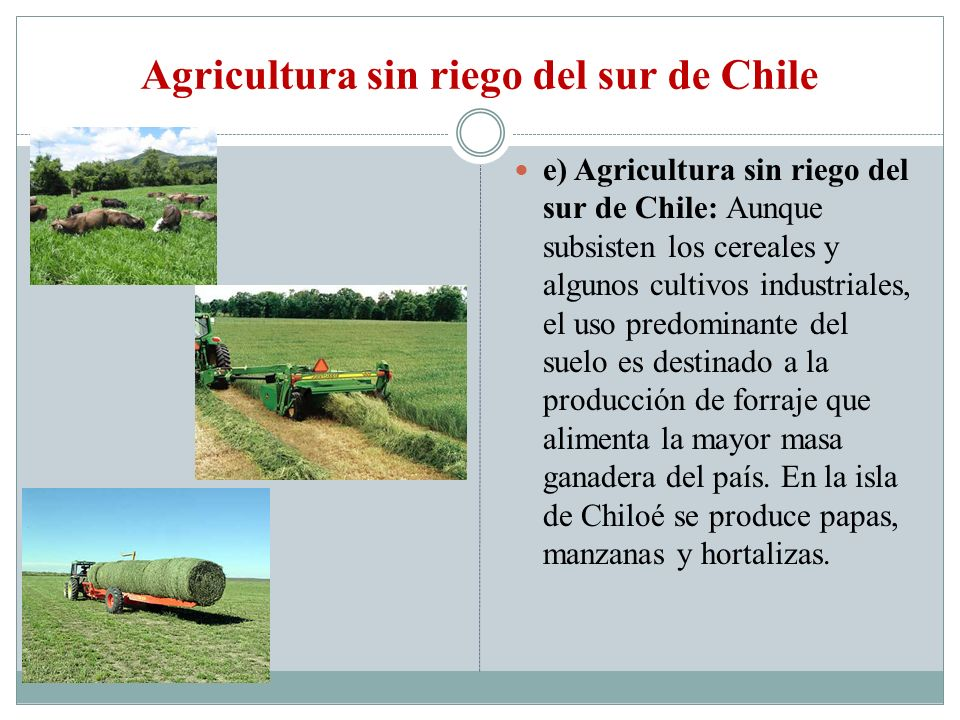 Agricultura sin riego del sur de Chile