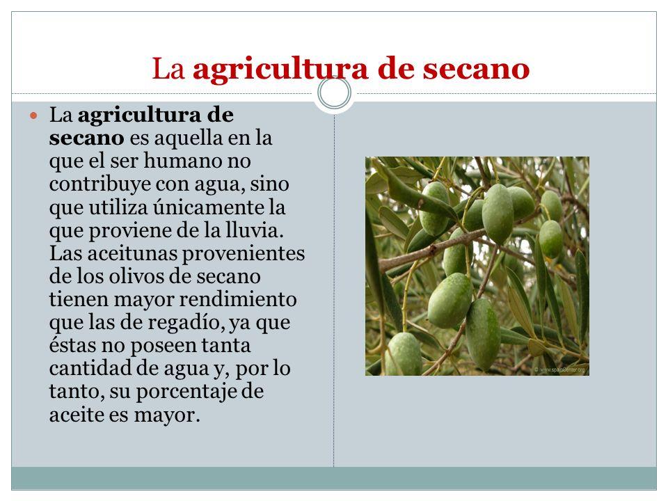 La agricultura de secano