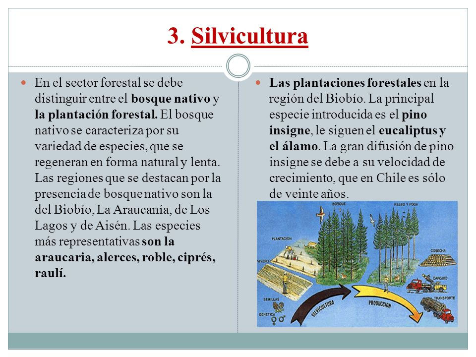 3. Silvicultura