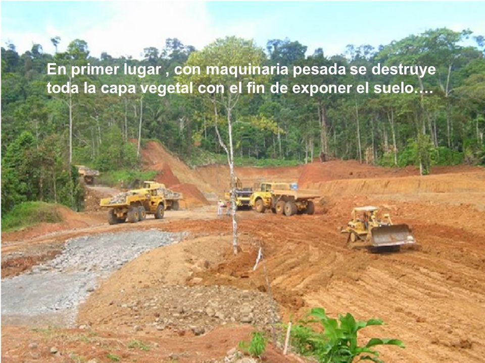En primer lugar , con maquinaria pesada se destruye toda la capa vegetal con el fin de exponer el suelo….