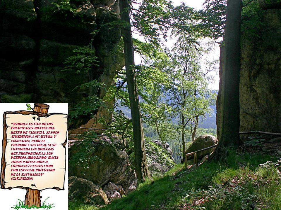 Mariola es uno de los principales montes del Reyno de Valencia, si sólo atendemos a su altura y vegetales; pero el primero y sin igual si se considera las riquezas que proporciona a los pueblos arrojando hacia todas partes ríos o copiosas fuentes como por especial privilegio de la Naturaleza (Cavanilles)