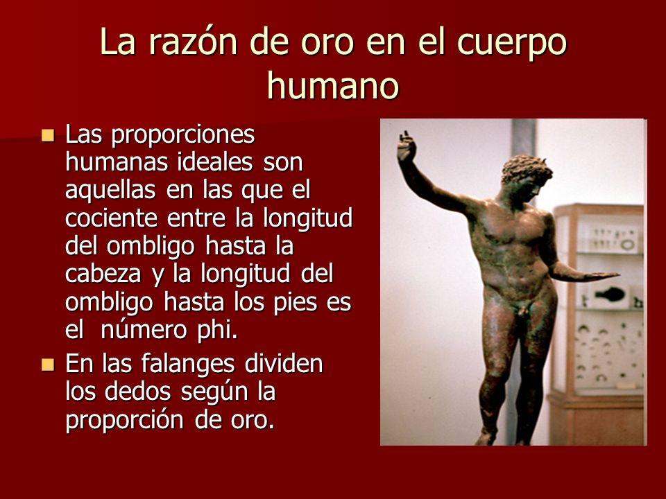 La razón de oro en el cuerpo humano