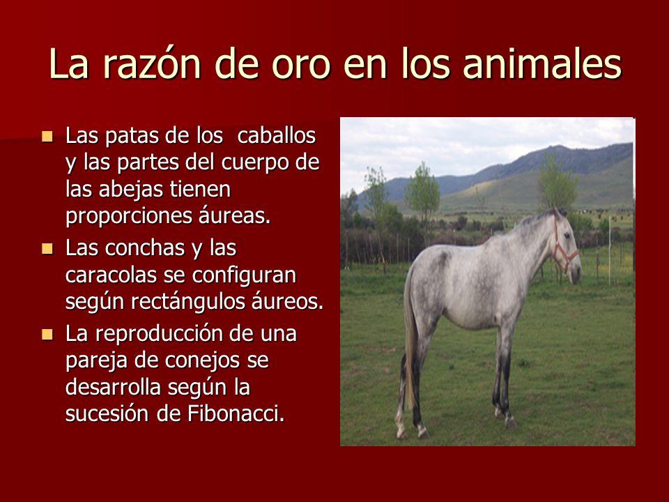 La razón de oro en los animales