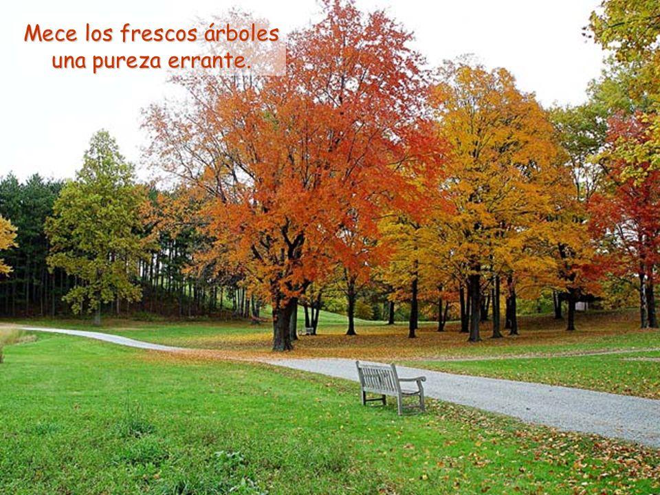Mece los frescos árboles una pureza errante.
