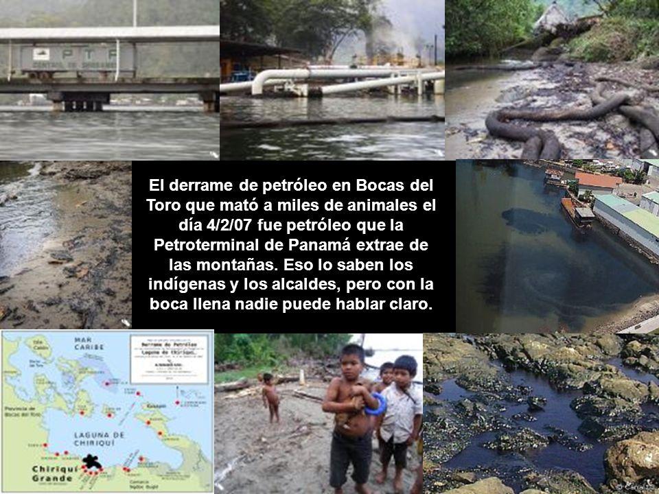 El derrame de petróleo en Bocas del Toro que mató a miles de animales el día 4/2/07 fue petróleo que la Petroterminal de Panamá extrae de las montañas.