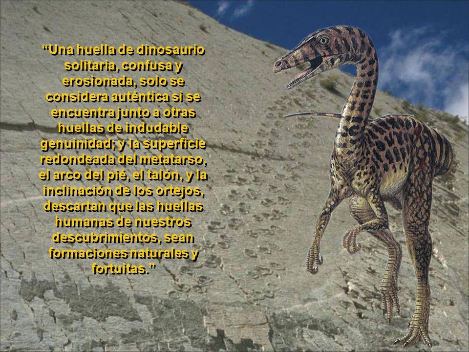 Una huella de dinosaurio solitaria, confusa y erosionada, solo se considera auténtica si se encuentra junto a otras huellas de indudable genuinidad; y la superficie redondeada del metatarso, el arco del pié, el talón, y la inclinación de los ortejos, descartan que las huellas humanas de nuestros descubrimientos, sean formaciones naturales y fortuitas.