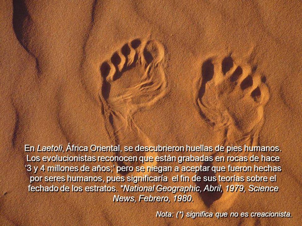 En Laetoli, África Oriental, se descubrieron huellas de pies humanos