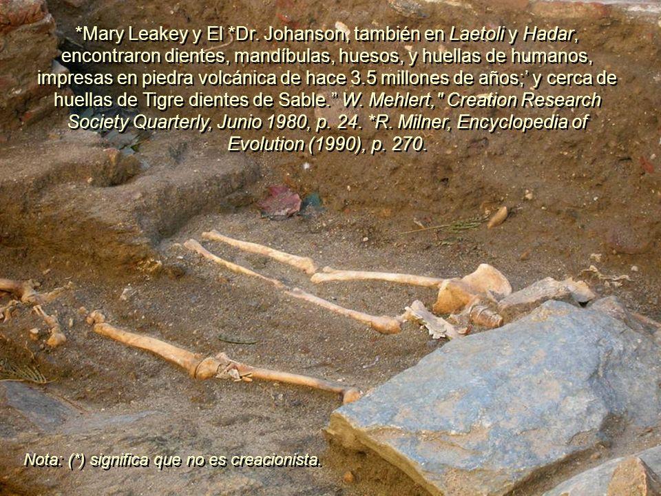 *Mary Leakey y El *Dr. Johanson, también en Laetoli y Hadar, encontraron dientes, mandíbulas, huesos, y huellas de humanos, impresas en piedra volcánica de hace 3.5 millones de años;' y cerca de huellas de Tigre dientes de Sable. W. Mehlert, Creation Research Society Quarterly, Junio 1980, p. 24. *R. Milner, Encyclopedia of Evolution (1990), p. 270.