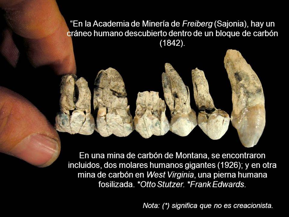 En la Academia de Minería de Freiberg (Sajonia), hay un cráneo humano descubierto dentro de un bloque de carbón (1842).