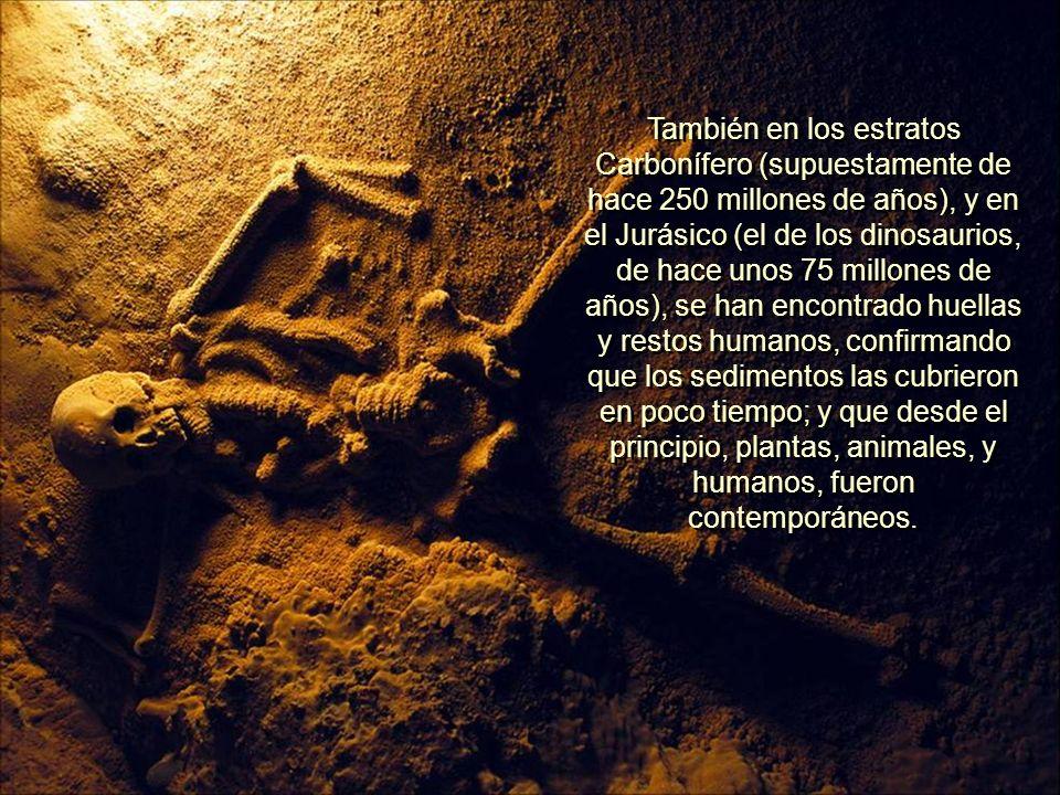 También en los estratos Carbonífero (supuestamente de hace 250 millones de años), y en el Jurásico (el de los dinosaurios, de hace unos 75 millones de años), se han encontrado huellas y restos humanos, confirmando que los sedimentos las cubrieron en poco tiempo; y que desde el principio, plantas, animales, y humanos, fueron contemporáneos.