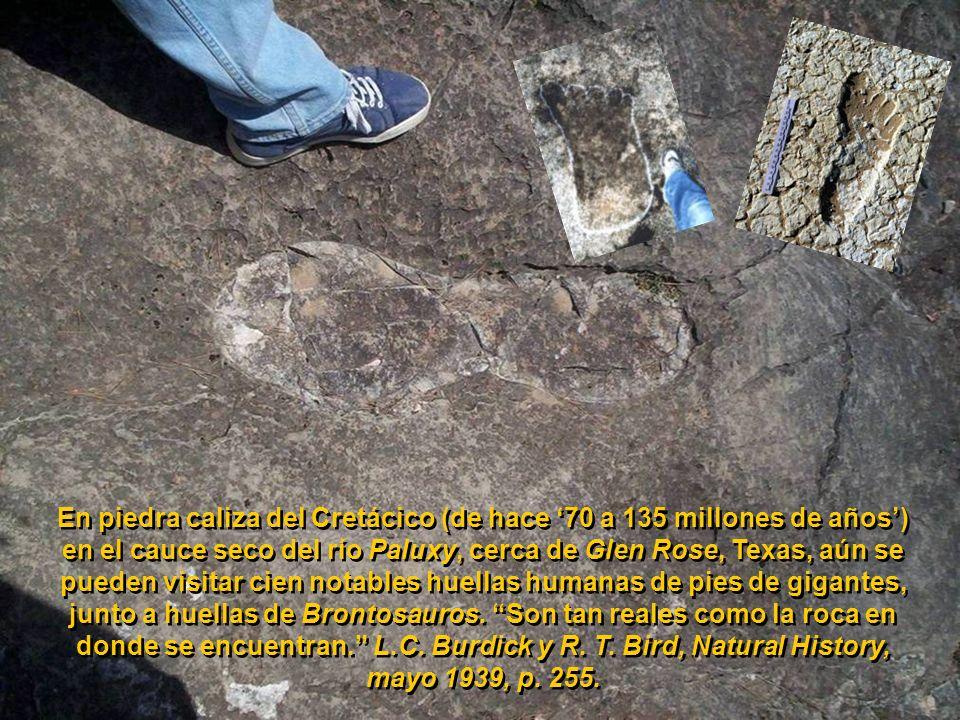 En piedra caliza del Cretácico (de hace '70 a 135 millones de años') en el cauce seco del río Paluxy, cerca de Glen Rose, Texas, aún se pueden visitar cien notables huellas humanas de pies de gigantes, junto a huellas de Brontosauros.