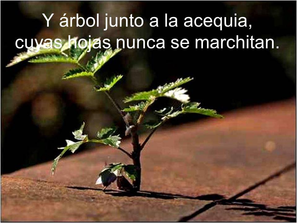Y árbol junto a la acequia, cuyas hojas nunca se marchitan.