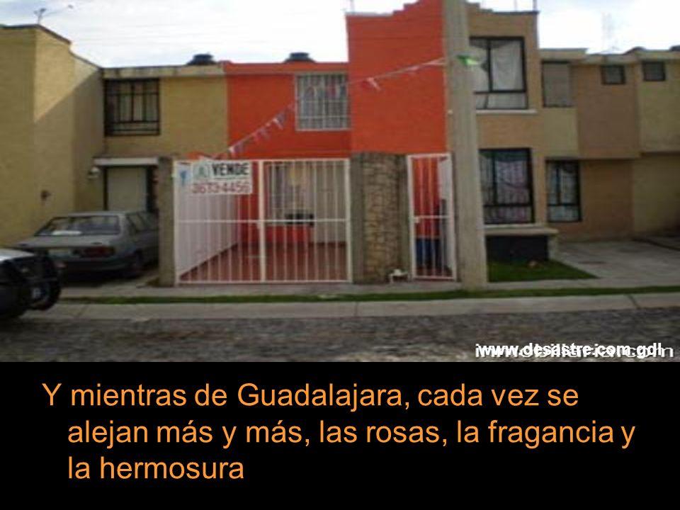 www.desastre.com.gdl Y mientras de Guadalajara, cada vez se alejan más y más, las rosas, la fragancia y la hermosura.
