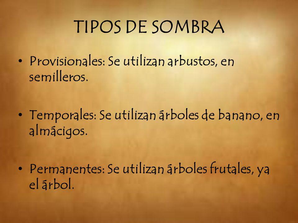 TIPOS DE SOMBRA Provisionales: Se utilizan arbustos, en semilleros.