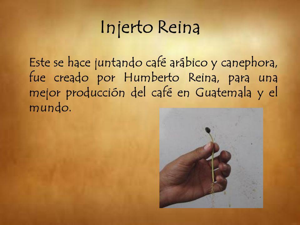 Injerto Reina