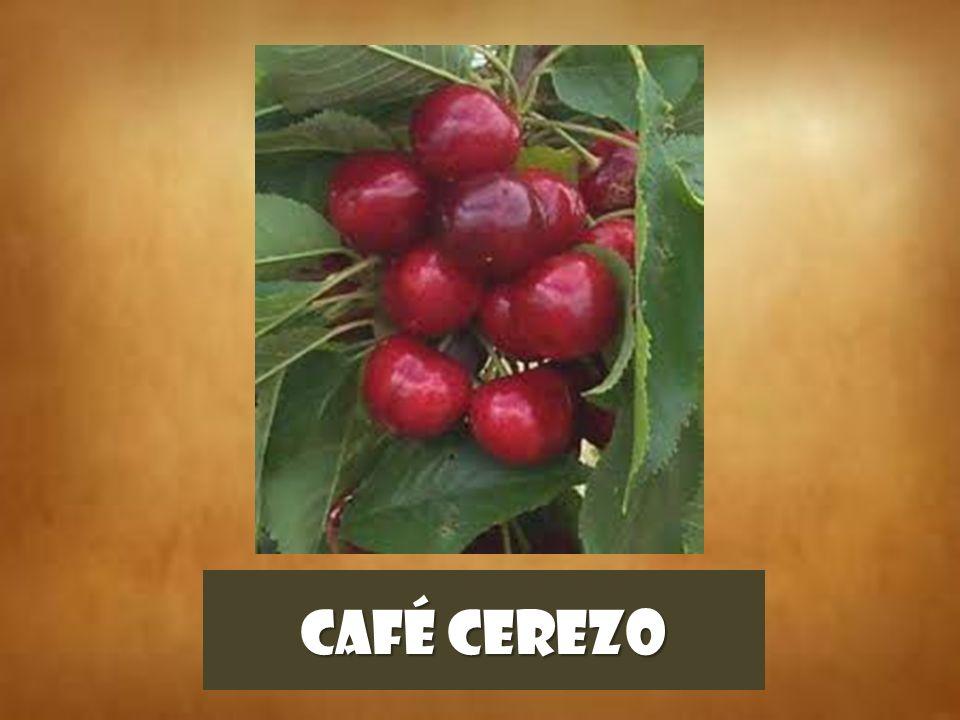 CAFÉ CEREZO