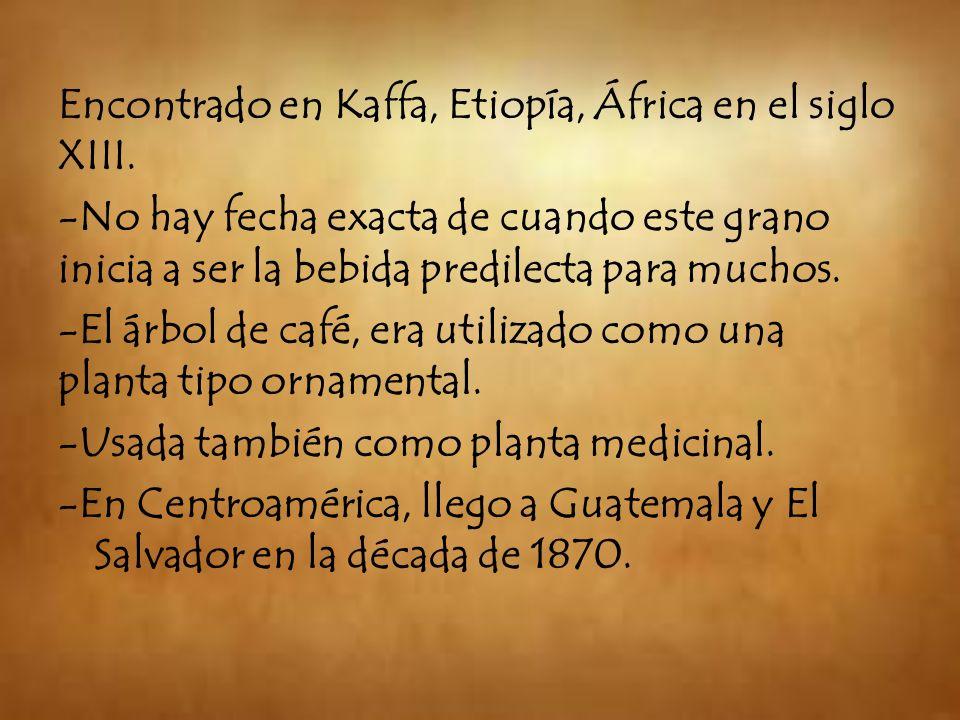 Encontrado en Kaffa, Etiopía, África en el siglo XIII.