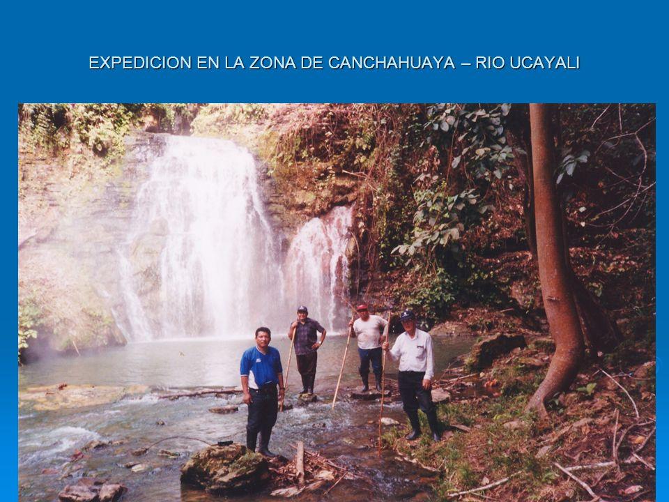 EXPEDICION EN LA ZONA DE CANCHAHUAYA – RIO UCAYALI
