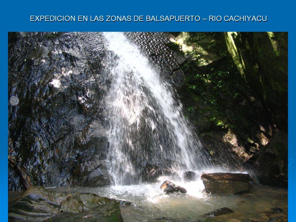 EXPEDICION EN LAS ZONAS DE BALSAPUERTO – RIO CACHIYACU