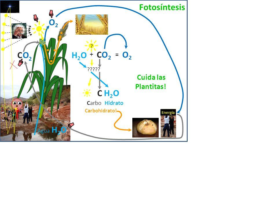 Fotosíntesis O2 2 C O H2O CO2 O2 C H2O Cuida las Plantitas! + =