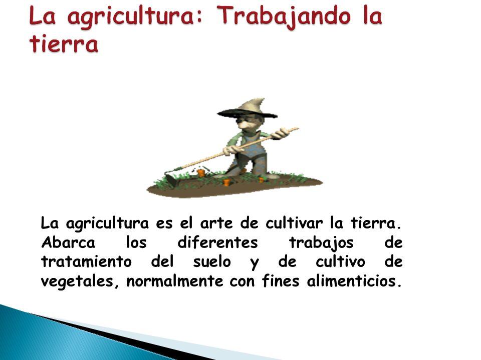 La agricultura: Trabajando la tierra