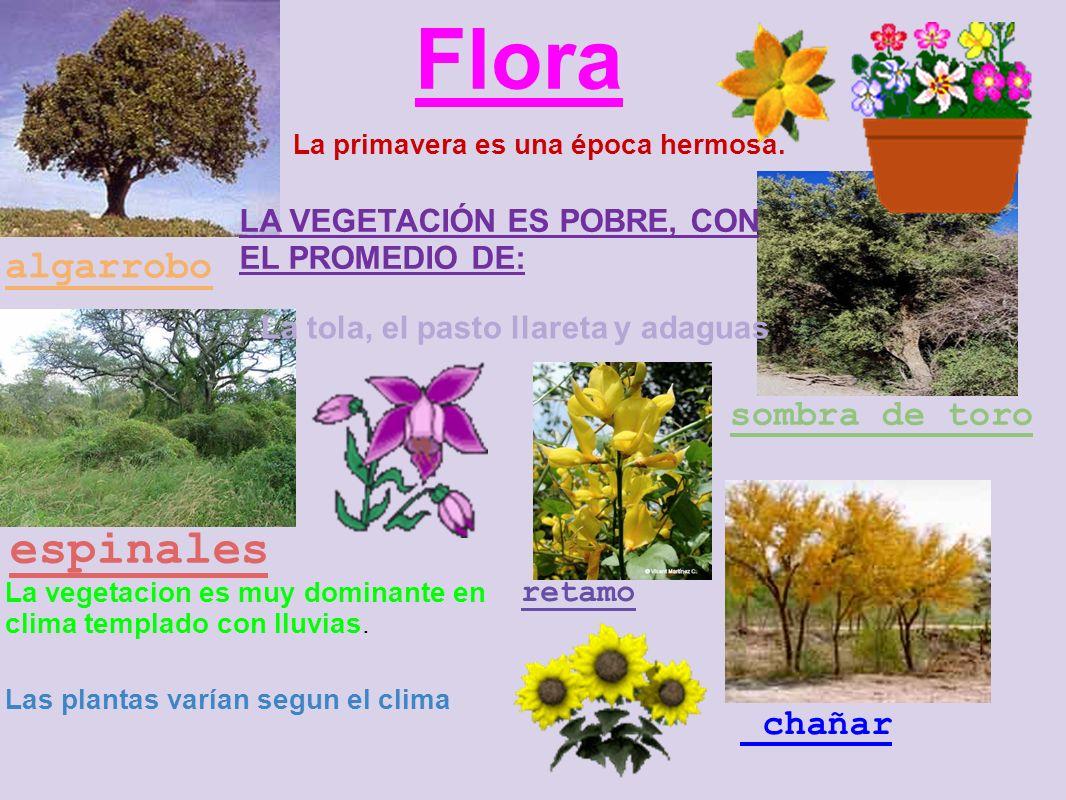 Flora espinales algarrobo sombra de toro chañar