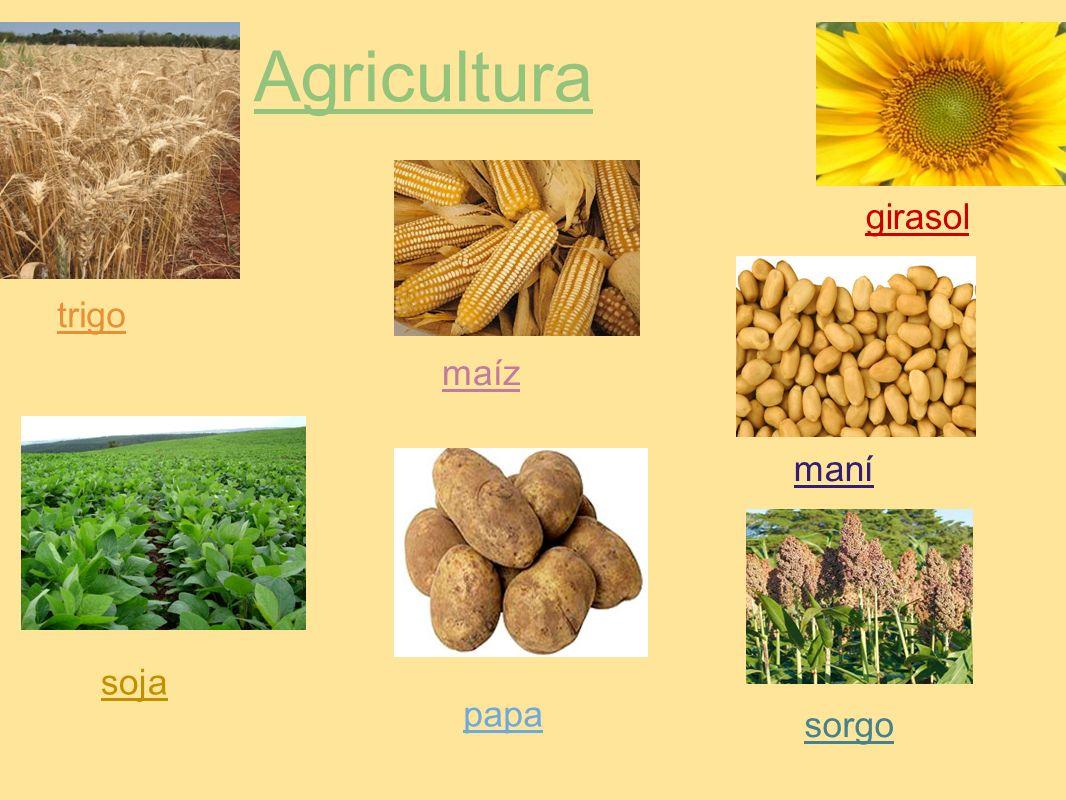 Agricultura girasol trigo maíz maní soja papa sorgo