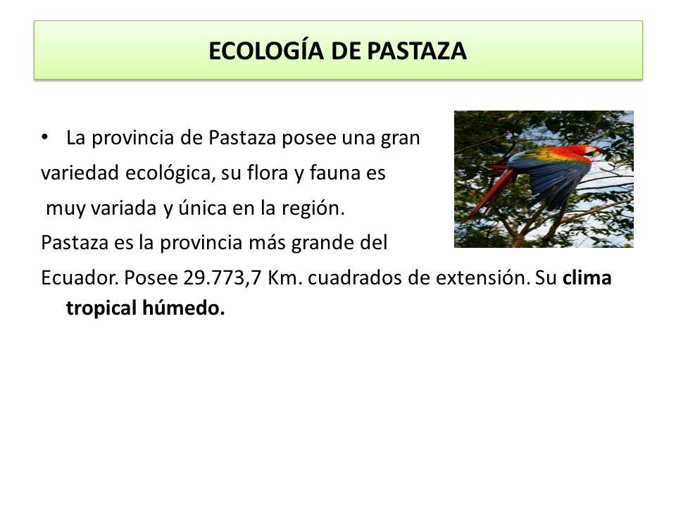 ECOLOGÍA DE PASTAZA La provincia de Pastaza posee una gran