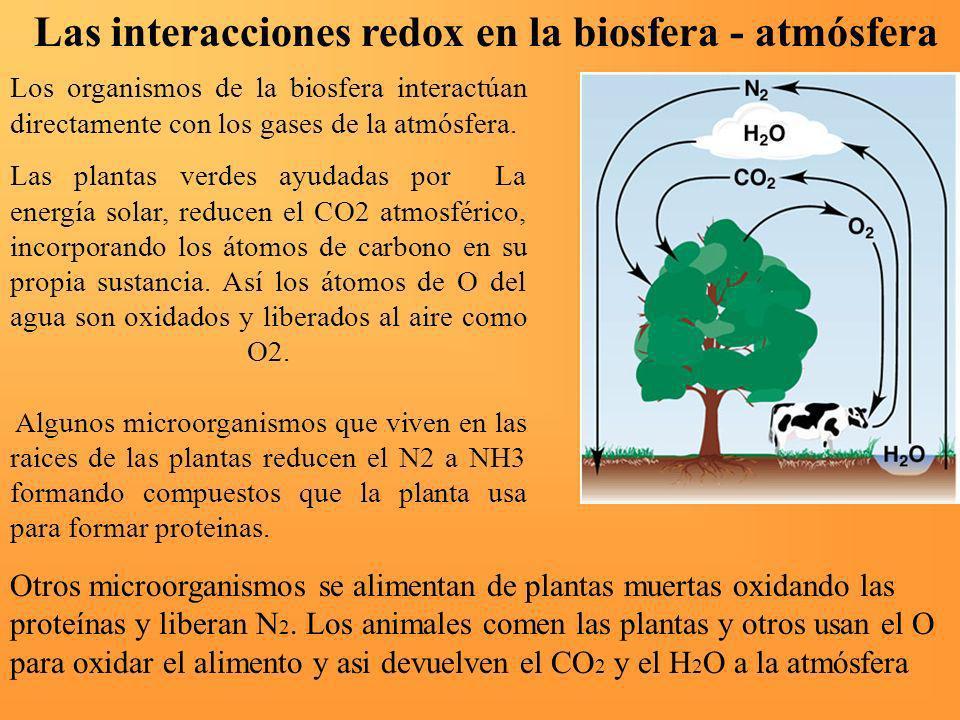 Las interacciones redox en la biosfera - atmósfera
