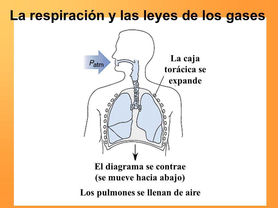 La respiración y las leyes de los gases