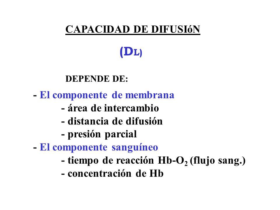 (DL) CAPACIDAD DE DIFUSIóN - El componente de membrana