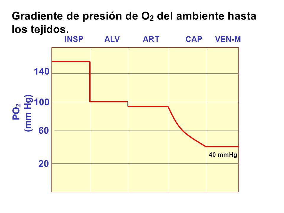 Gradiente de presión de O2 del ambiente hasta los tejidos.