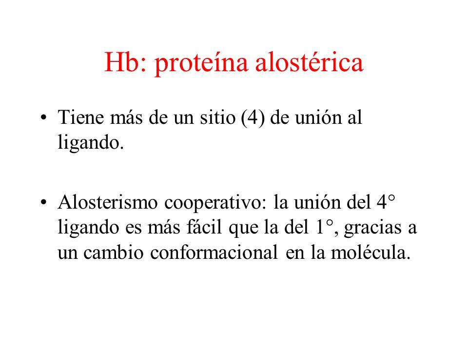 Hb: proteína alostérica