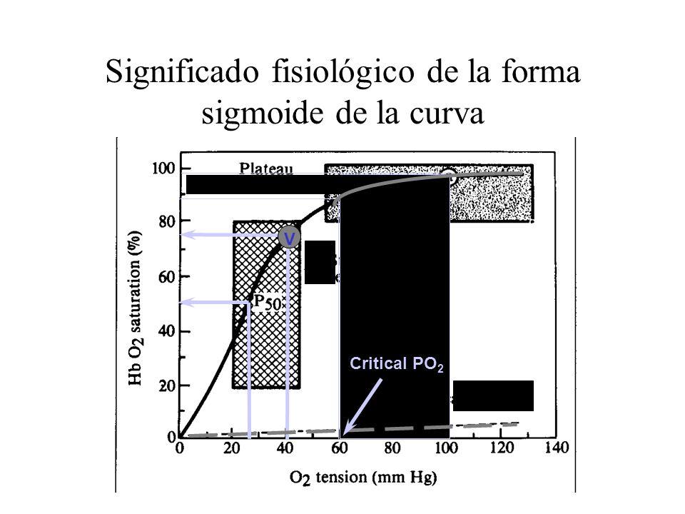 Significado fisiológico de la forma sigmoide de la curva
