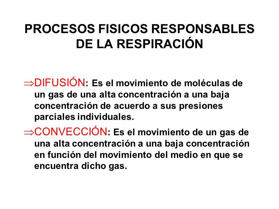 PROCESOS FISICOS RESPONSABLES DE LA RESPIRACIÓN